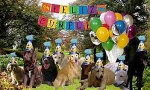 Fiesta de cumpleaños con perros