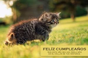 Te deseo un muy feliz cumpleaños