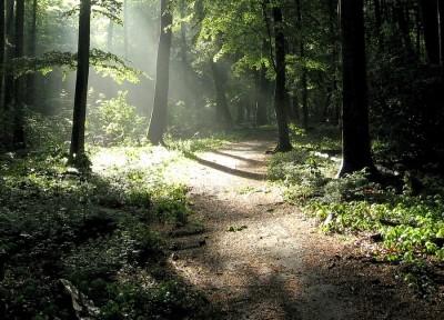 bosque-4