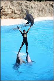 foto de delfin