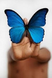 foto de mariposa