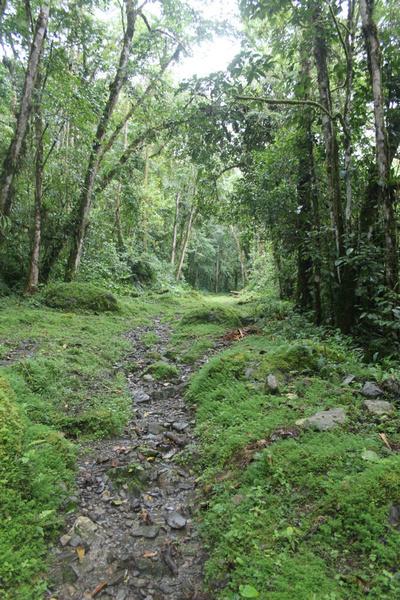 fotos de bosques