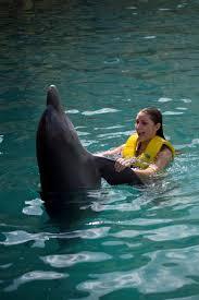 imagen de delfin