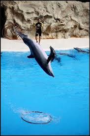 imagen de delfines