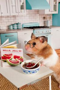 imagen de hamster
