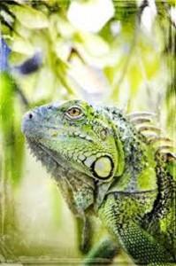 imagen de iguana