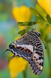 imagen de mariposas