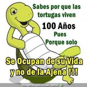 Consejos de un tortuga sabia