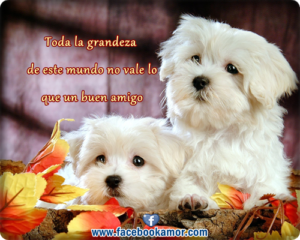 Un buen amigo es aquel que te ayuda a pasar el día