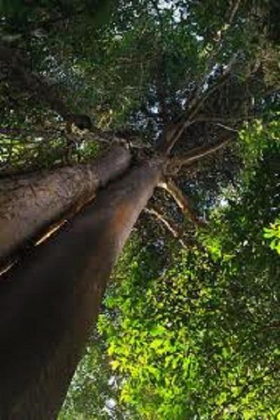imagenes de bosques