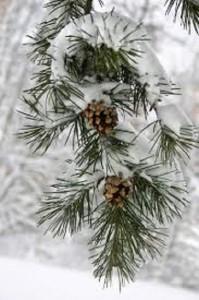 imagenes de nieve