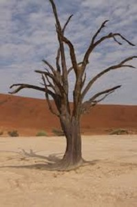 imagenes del desierto
