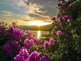 paisajes de flores y rios