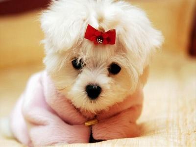 perro tierno 1