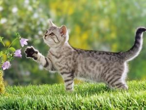 Fotos de un gato en el jardín