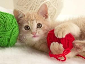 Fotos de un lindo gato jugando con lana de colores