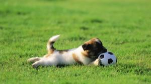 fotos de un perro jugando en el jardín