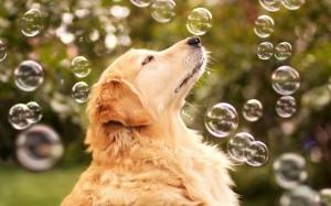 Fotos de un perro jugando con burbujas