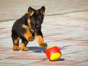 Fotos de un perro con su juguete