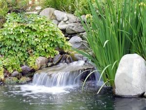 Hermosos estanques de peces con cascadas