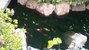imágenes hermosas de peces en el jardín