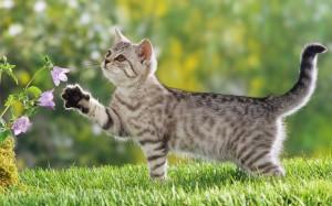 Los mejores fondos de pantalla con lindos gatitos 2