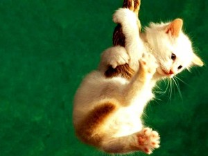 imágenes de un gato a punto de caer