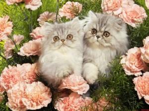 Los mejores fondos de pantalla con lindos gatitos 6