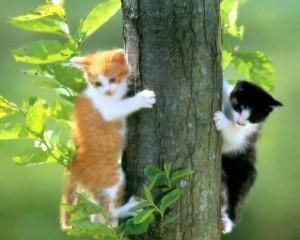 Los mejores fondos de pantalla con lindos gatitos 7