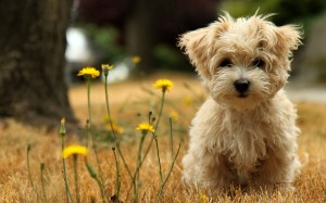 imágenes de un lindo perrito en el campo