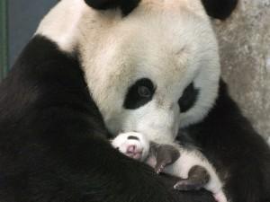 imágenes tiernas de un ositó bebé con su madre