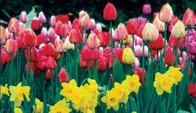 flores jazmin