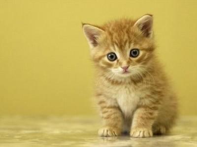 gatos nerviosos