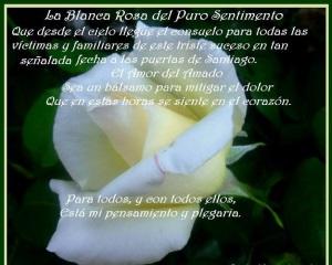 rosa_blanca_2000