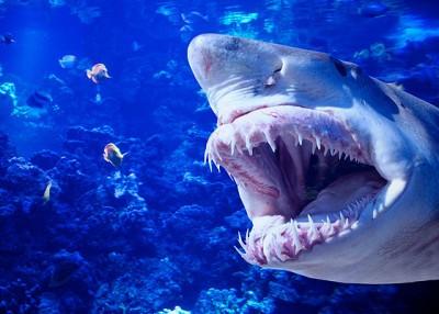 tiburon peligroso