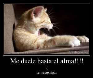 armatucoso-me-duele-hasta-el-alma-1833795