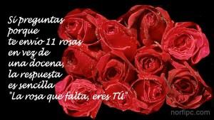 11-rosas