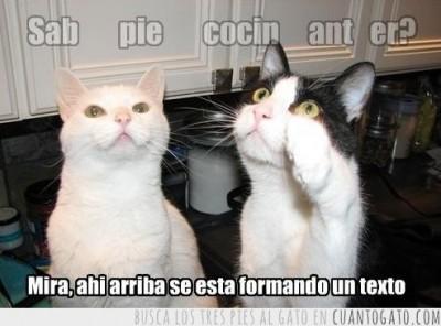 CG_5028_asi_se_forma_un_chiste_de_gatos