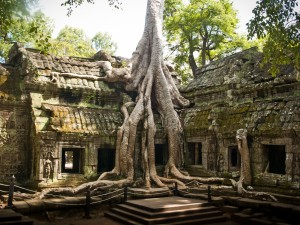 camboya,bosque