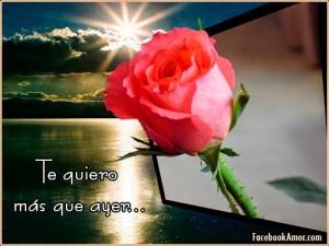 frases-con-flores-para-amor-rosas