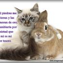 imagenes de amor de gato y el liebre