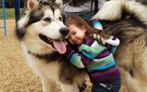 perro alaskan malamute con niña